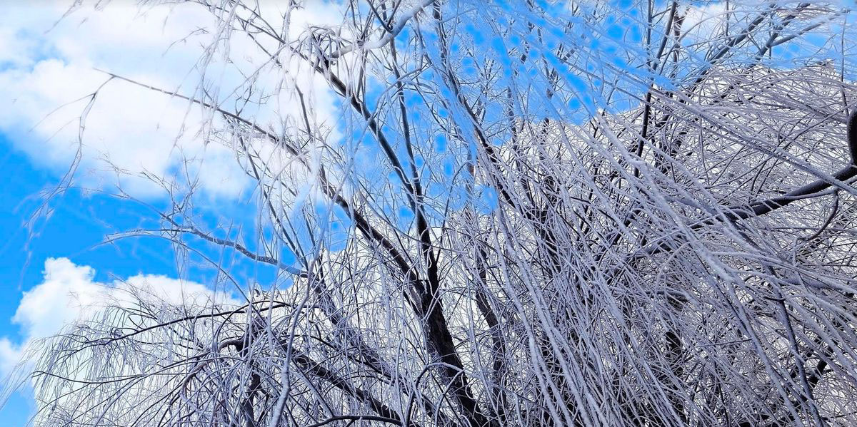 Ice-on-Trees-in-China