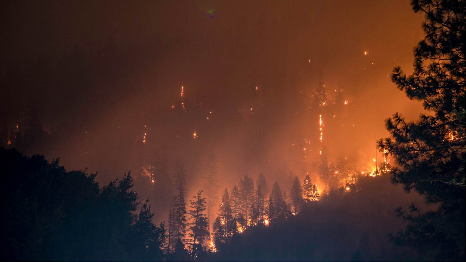 wildfire in forest
