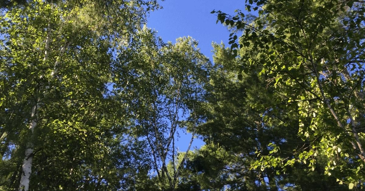 Trees by Paul Douglas