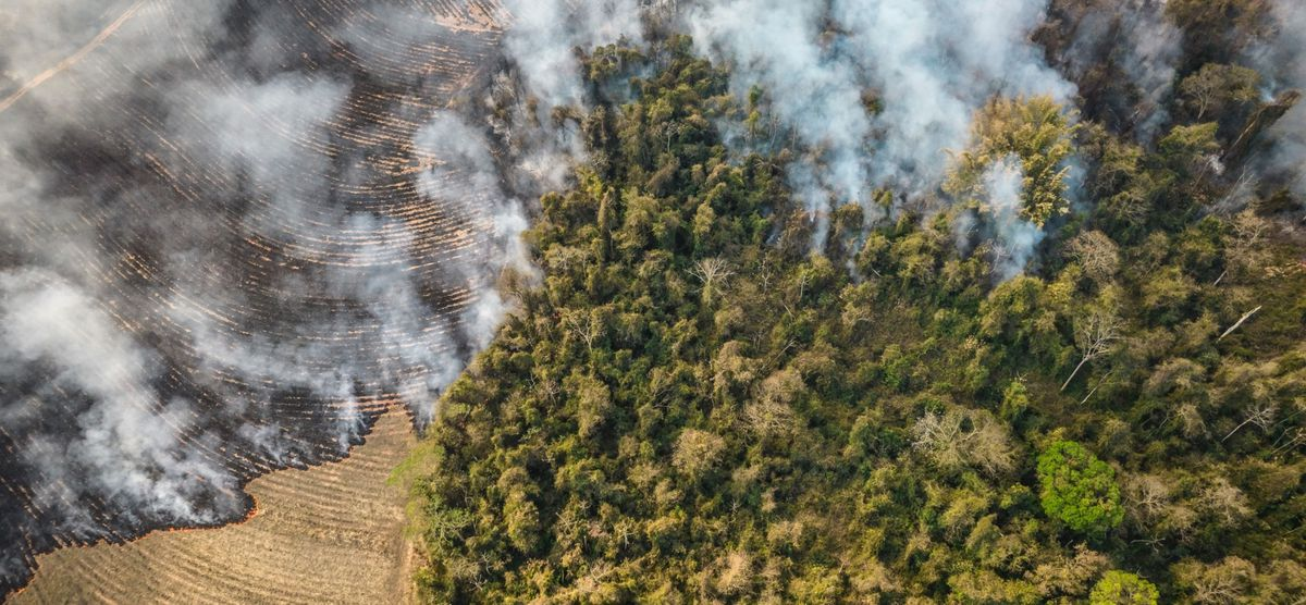 Fires burn on a farm next to a forest in Sao Paulo. Photo by Jonne Roriz, Bloomberg.